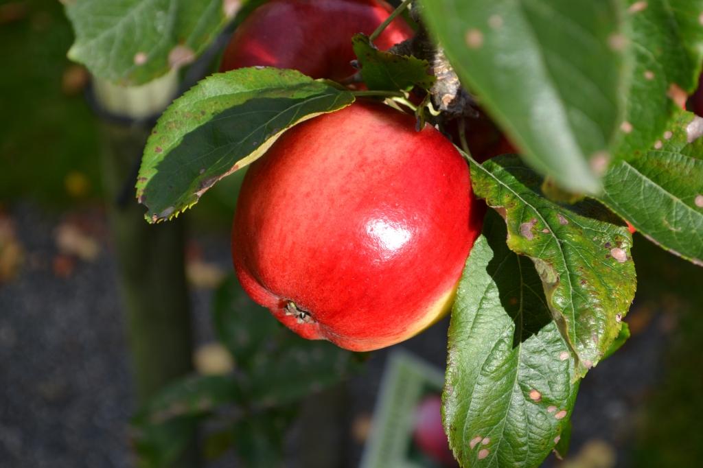 Um passeio a Kivik e ao Mercado da maçã